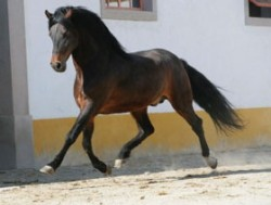 Alter Real au trot