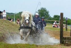 Attelage avec un cheval Boulonnais