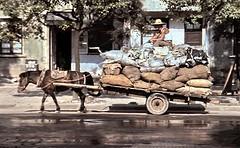 Attelage avec un poney Baise - Guangxi