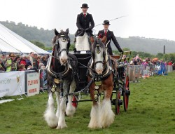 Attelage Clydesdale