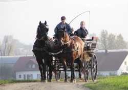Attelage de chevaux Altwürttemberg