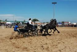 Attelage de chevaux Basse Elide