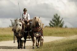 Attelage de chevaux Black Forest Chestnut