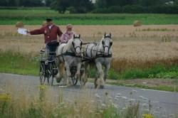 Attelage de chevaux Boulonnais lors de la route du poisson