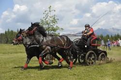 Attelage de chevaux Castillonnais