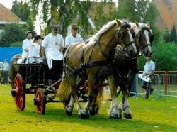 Attelage de chevaux Flamands