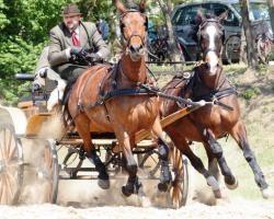 Attelage de chevaux Furioso North Star