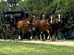 Attelage de chevaux Gelderland