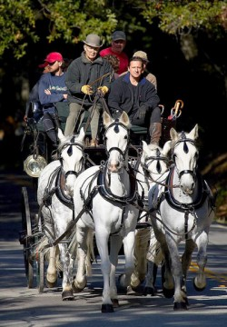 Attelage de chevaux Kladrubers
