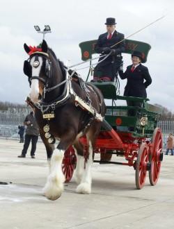 Attelage de chevaux Shire