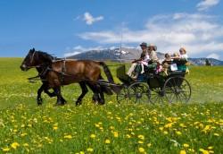 Attelage traditionnel de chevaux Abtenauer