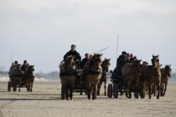 Attelages de chevaux Henson lors de la Trans'Henson
