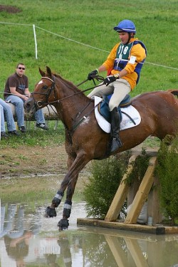 Australian Stock Horse sur le cross