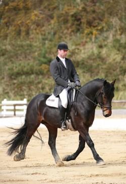 Champion de race 2005, qualifié à Saumur en dressage jeunes chevaux 4ans, Oli de Carbouneros