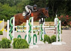 Cheval American Warmblood en saut d'obstacle