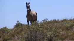 Cheval Andin dans sa montagne