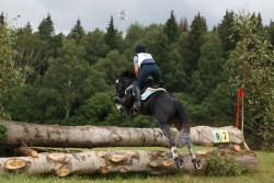 Cheval Anglo-Kabarde sur le cross
