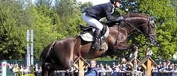 Cheval Bavarois en saut d'obstacle