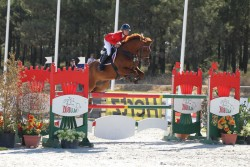 Cheval Boudienny en obstacle
