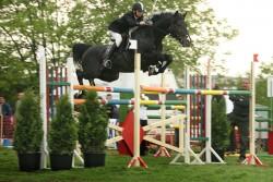 Cheval Bulgare Oriental en saut d'obstacle