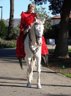 Cheval Camarillo lors d'une parade