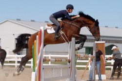Cheval Candien en saut d'obstacle