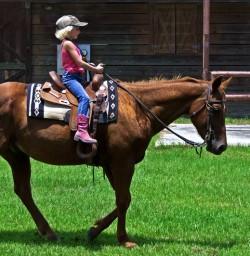 Cheval Carolina Marsh Tacky et une petite fille