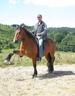 Cheval d'Auvergne monté