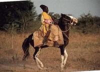 Cheval Dongola monté