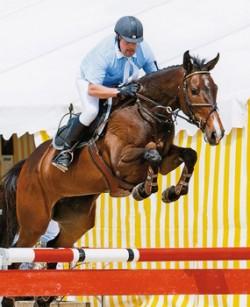 Cheval Einsiedler en saut d'obstacle