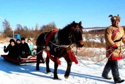 Cheval Heihe utilisé pour le transport