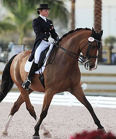 Cheval Holsteiner en dressage