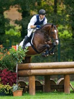 Cheval Holsteiner sur le cross du concours complet