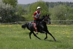 Cheval Kabardin en endurance