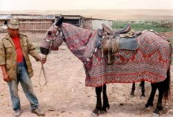 Cheval Kazakh en tenue traditionnelle