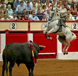 Cheval Lusitanien au cours d'une corrida