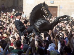 Cheval Minorquin au cabré lors des fêtes traditionnelles