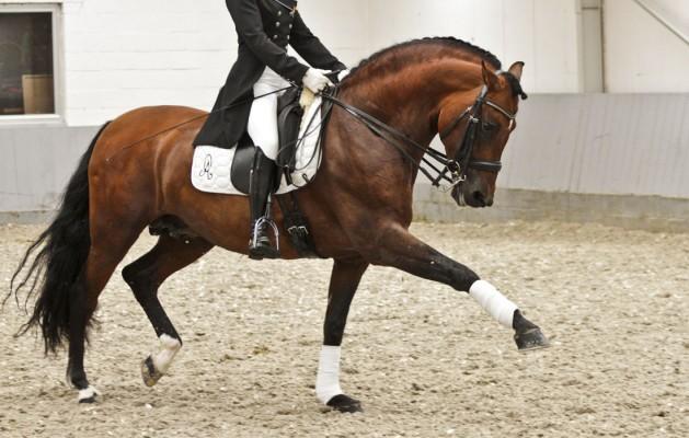 cheval espagnol caracteristique