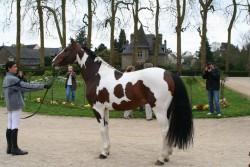 Cheval Quarter Horse pie
