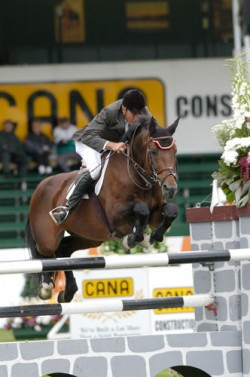 Cheval Trakehner en saut d'obstacle
