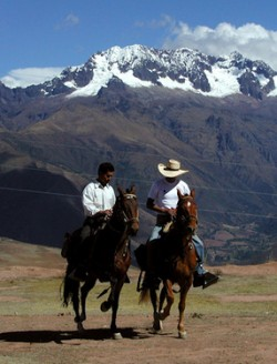 Chevaux Chumbivilcas dans les montagnes