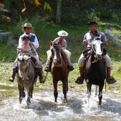 Chevaux Criollo Péruvien et leurs cavaliers