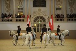 Chevaux de Pure Race Espagnole à la Haute Ecole d'Art Equestre Andalouse