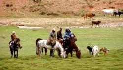 Chevaux Kirghiz montés