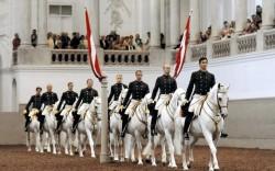 Chevaux Lipizzans à l'Ecole Espagnole d'Equitation