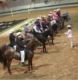 Concours de modèle et allures de chevaux Paso Fino