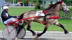 Course avec un cheval Dole Gudbrandsdal