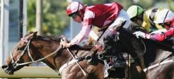 Course de chevaux Anglo-Arabe Sarde