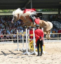 Démonstration de saut d'obstacle avec un Haflinger