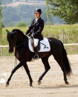 Dressage avec un cheval Minorquin